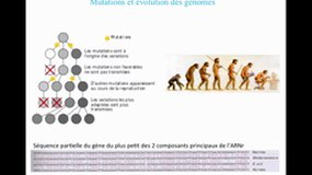 UE9-C4.S2 Réplication du génome - Evolution des génomes