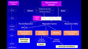 UE4-A5.S1 Bases physiques - Radiobiologie et Radioprotection_E. LAFFON
