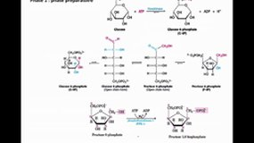 PACES_UE1-D2 Glycolyse et cycle de Krebs