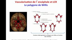 PACES_UE5-A16 Vascularisation, LCR et protection